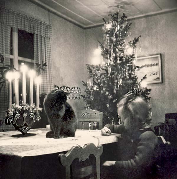 julbild-med_katt_600